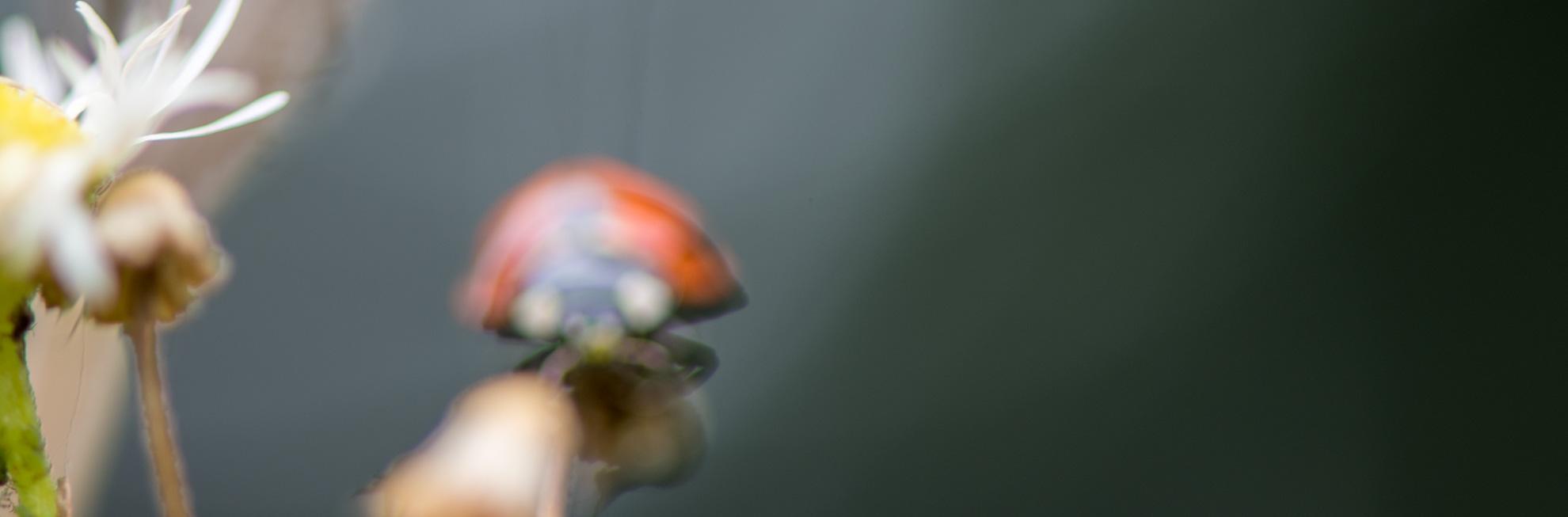 まとめ てんとう虫、見てるだけでほっこりする