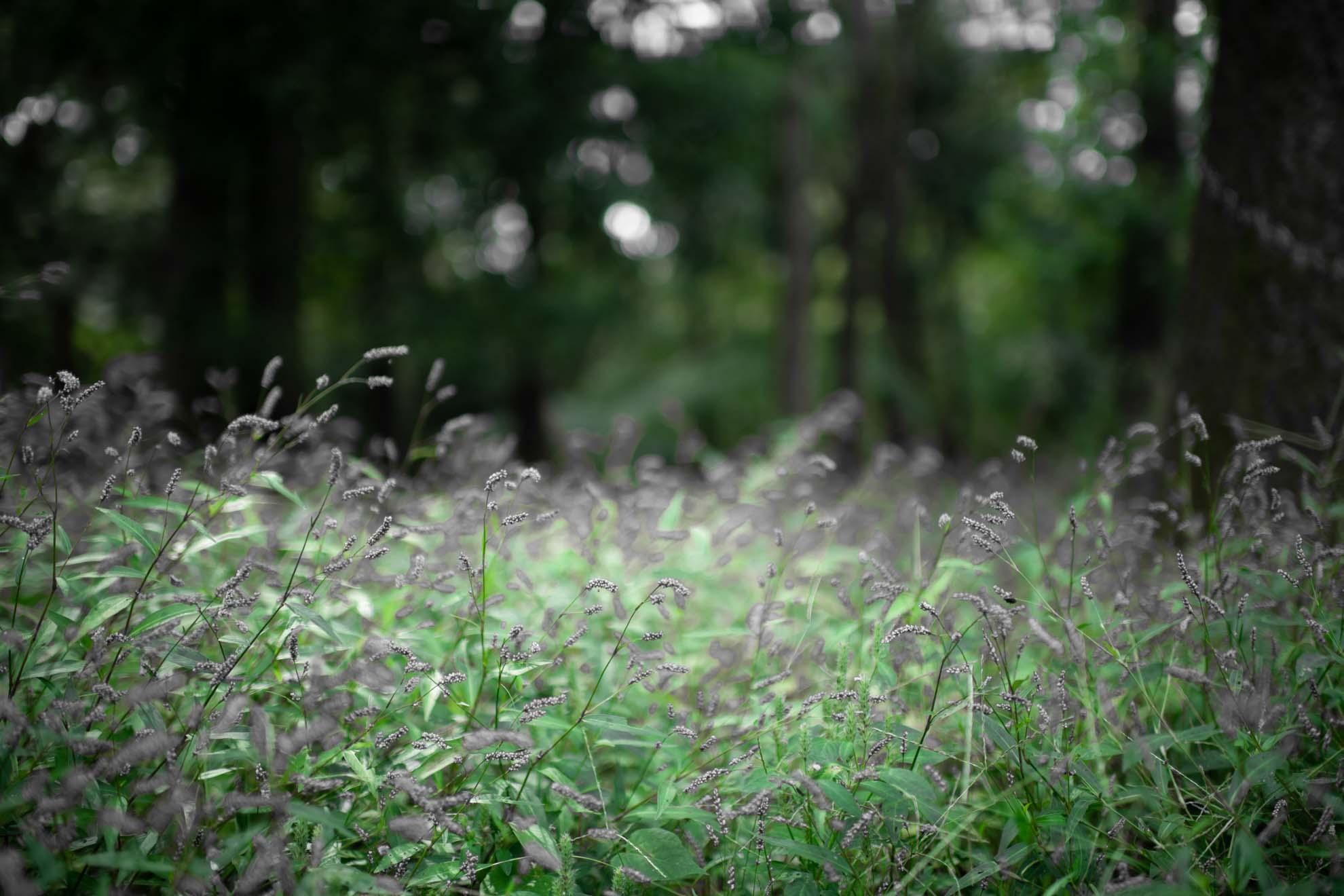 都立光が丘公園の風景写真