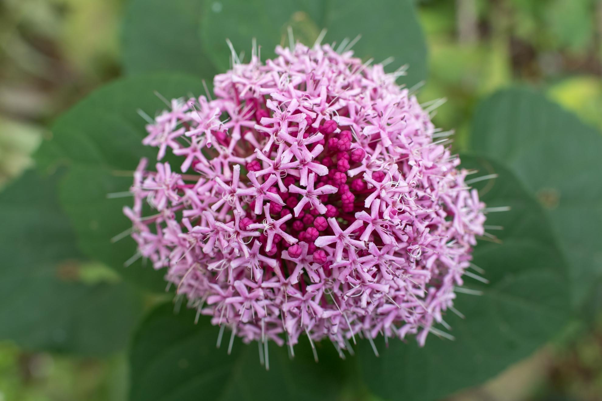 淡い色の植物
