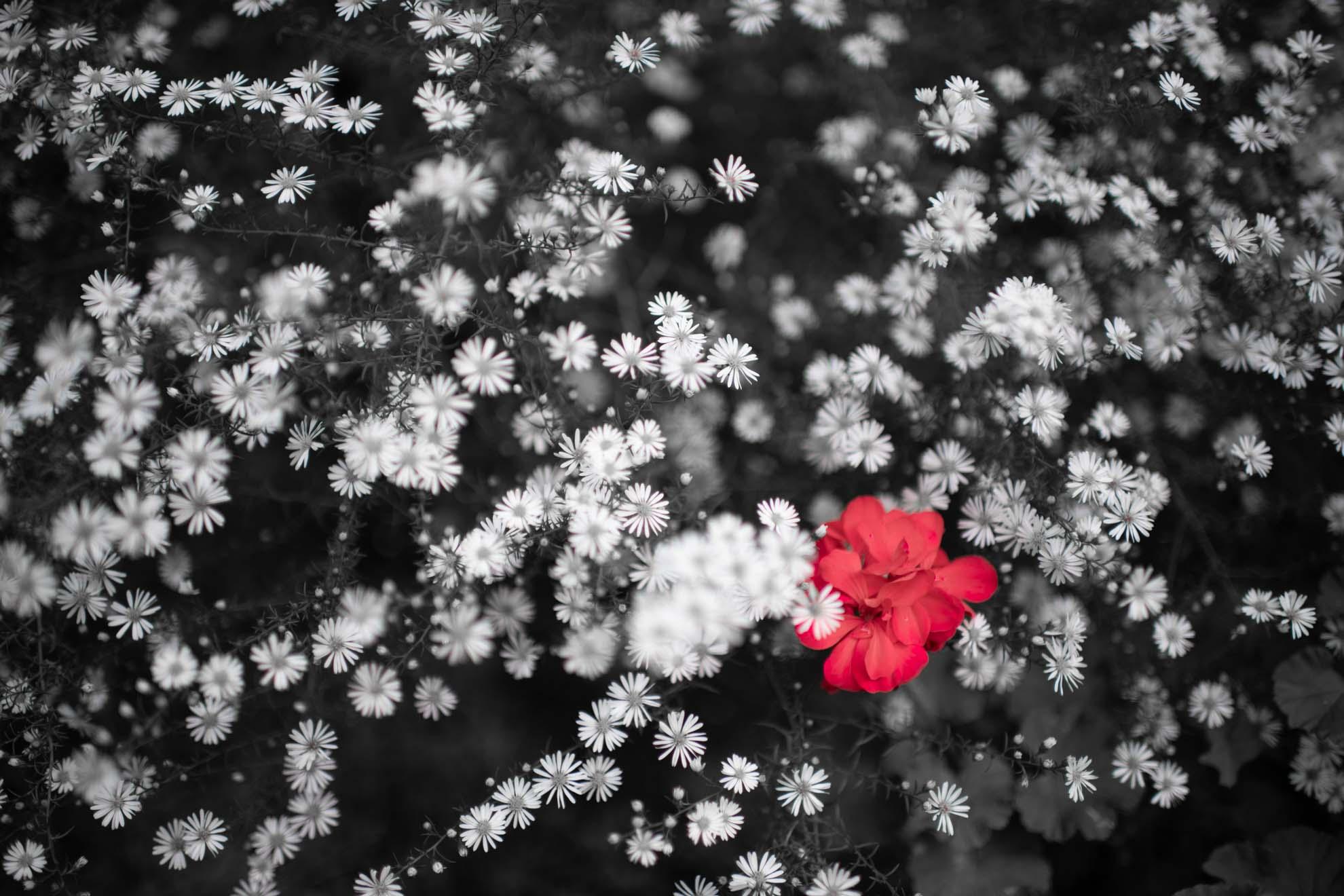 白い花と赤い花