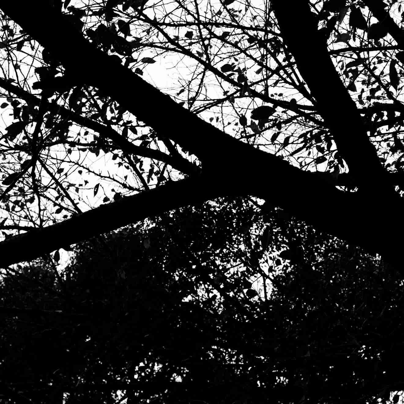 白と黒の情景