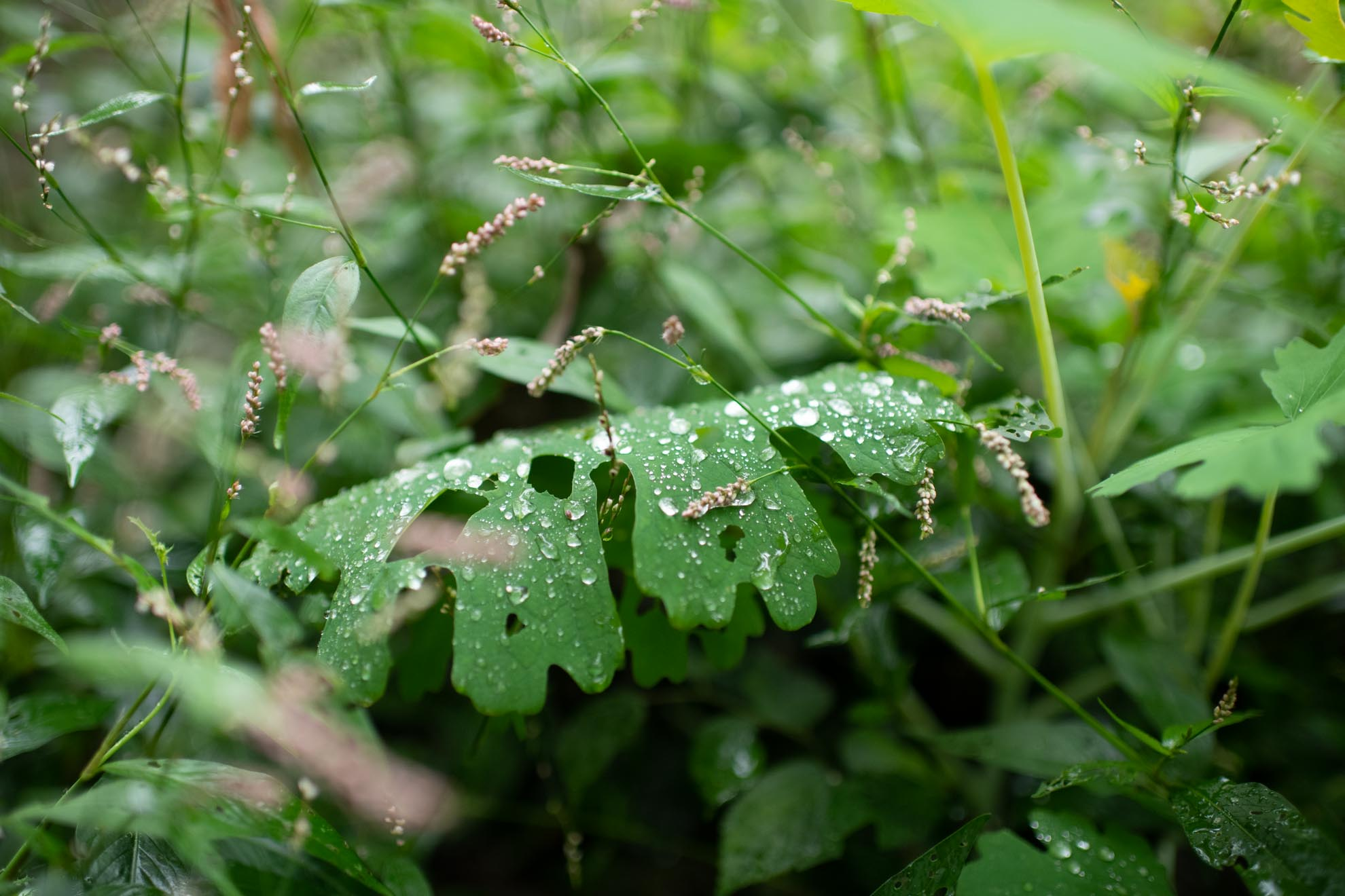 水の滴る葉