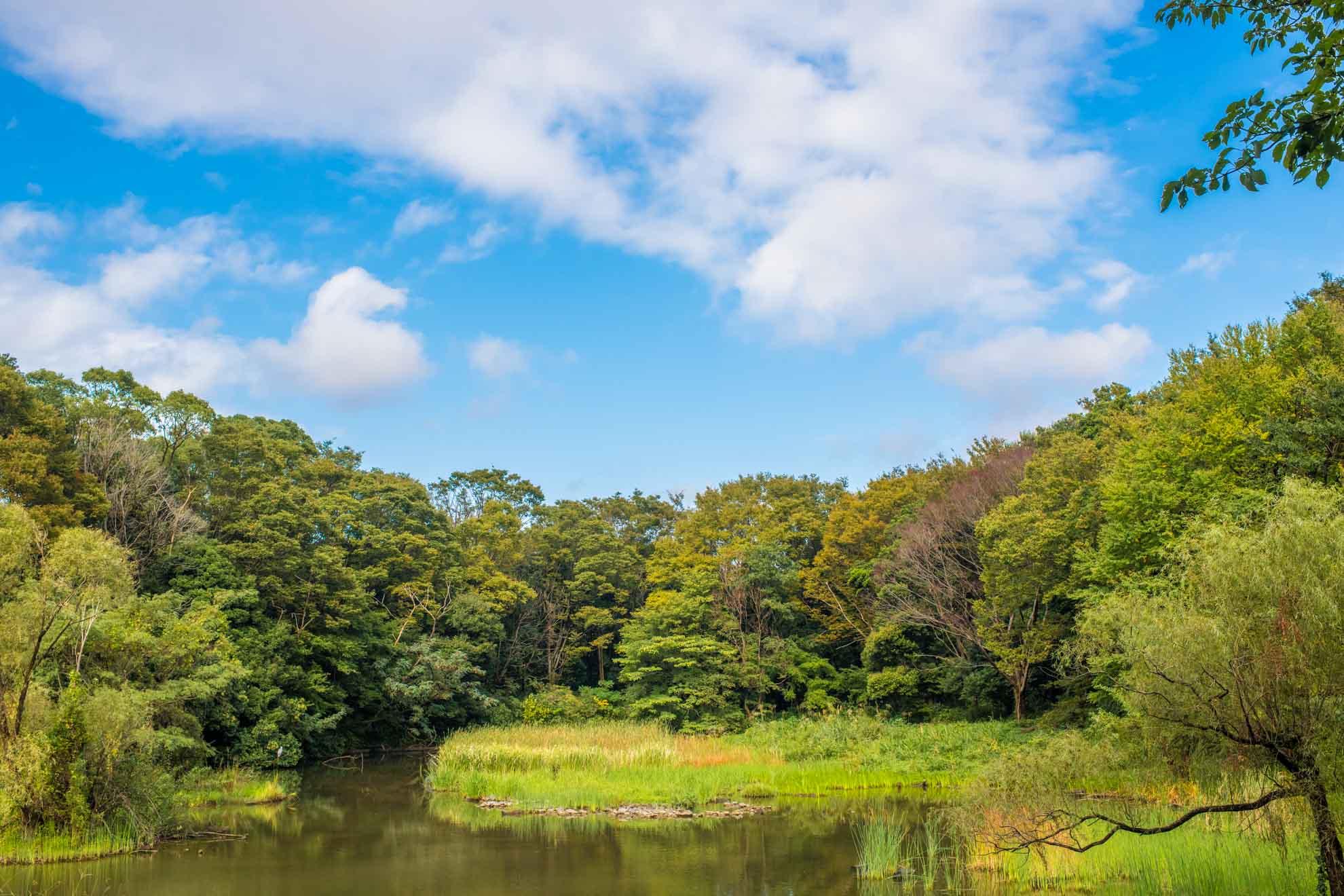 都立光が丘公園のバードサンクチュアリから望める秋の景色