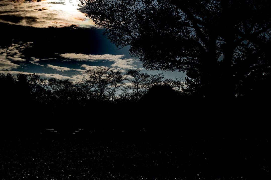 都立光が丘公園はこんなところ