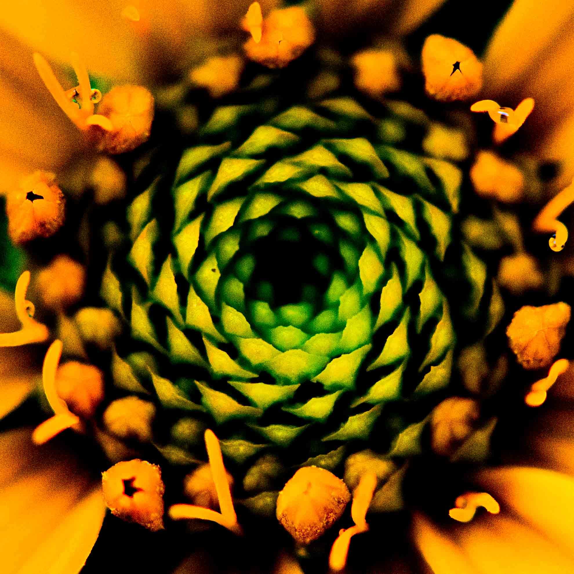 花をアーティスティックに