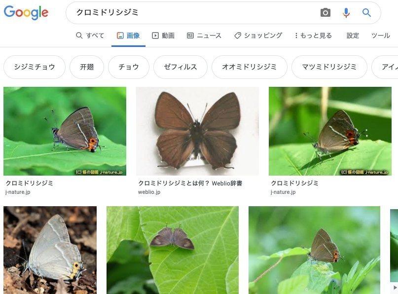 クロミドリシジミ F. yuasai