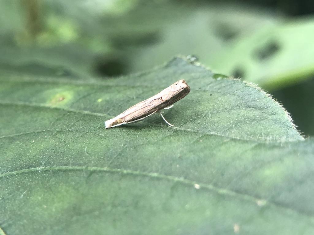 枝のような蛾、これはなんなんだ?