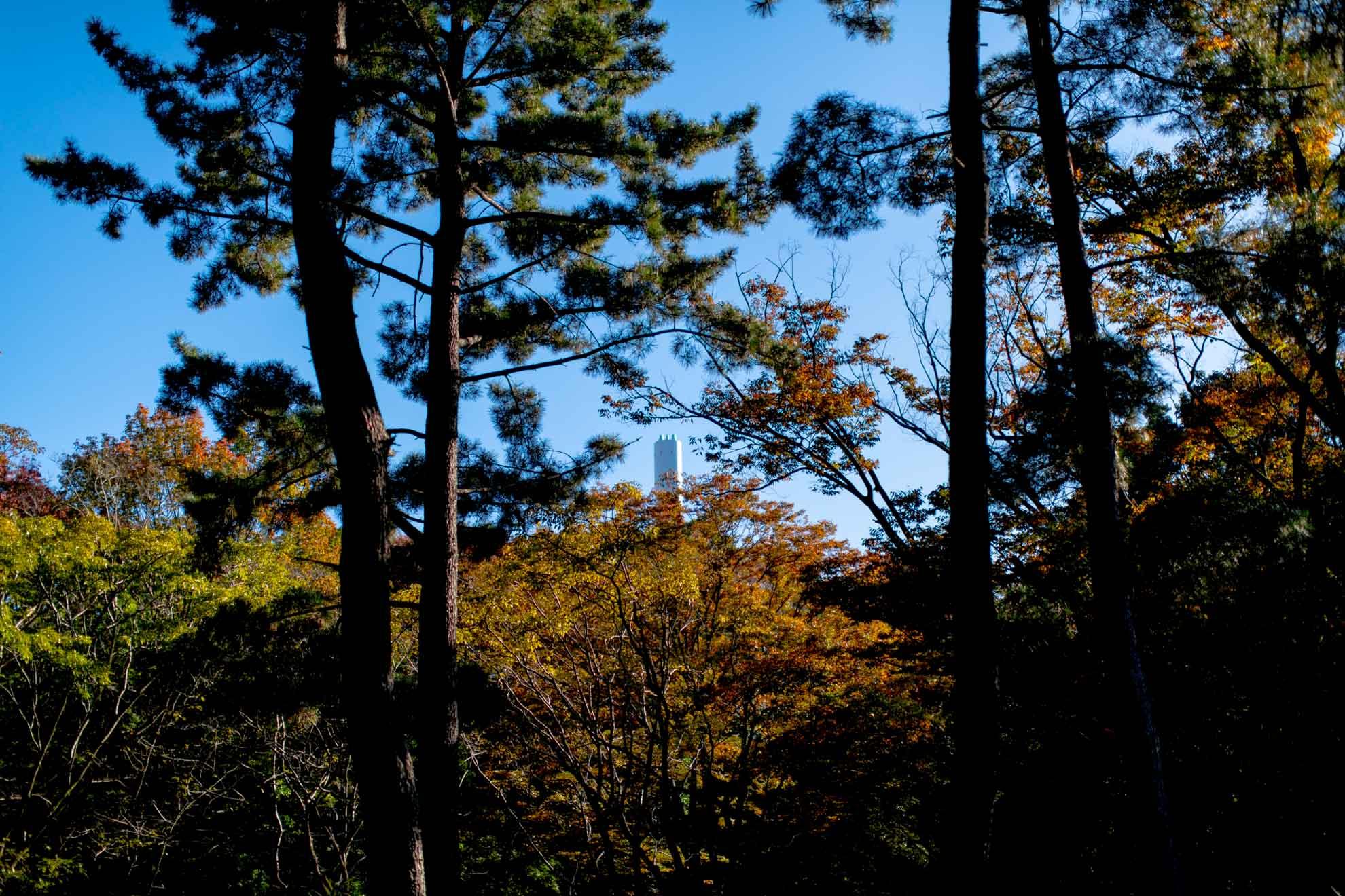 都立光が丘公園2020年の紅葉
