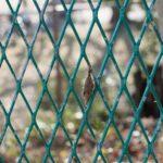 【チョウ目】ミノガ科 〜ミノムシの生態知ると切なさを感じる〜